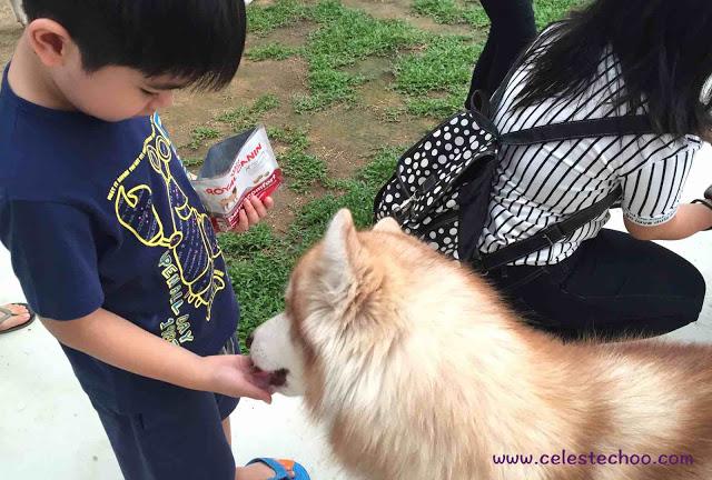 boy_feeding_dog_siberian_husky
